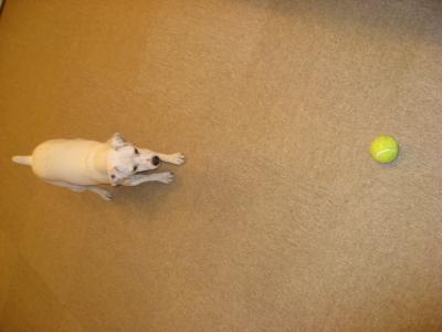 ボールです!