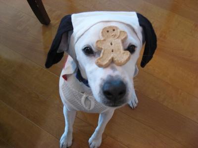 クッキーもらって。