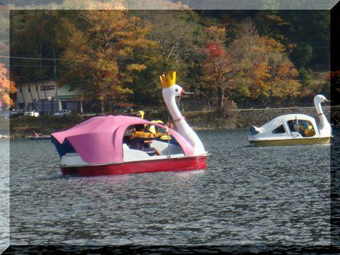 日光 白鳥ボート