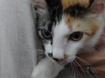 猫ちゃん16