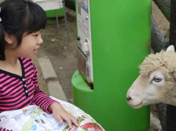 りーちゃんと羊1