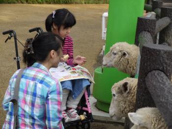 リーちゃんと羊