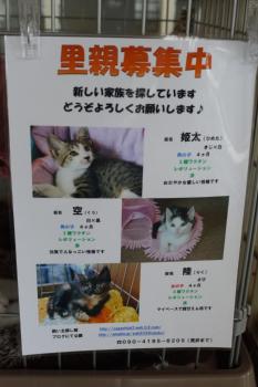ちゅう家のネコ