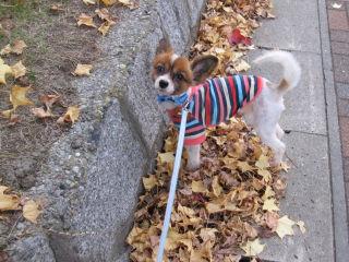 翼・秋の散歩