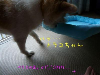 HaU1dD_5.jpg