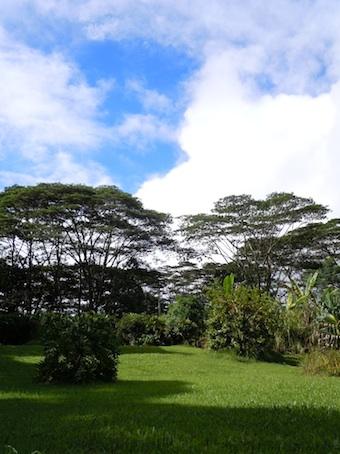 garden_2_20110112102205.jpg