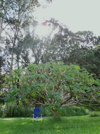garden_3_20110112102204.jpg