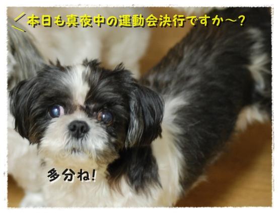 b1DSC_0066.jpg