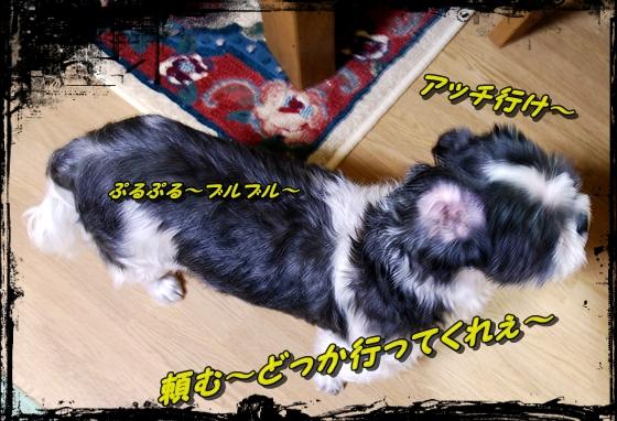 b1DSC_0386.jpg