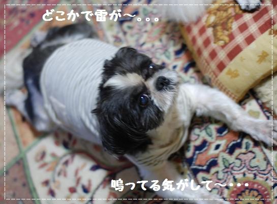b4DSC_0062.jpg