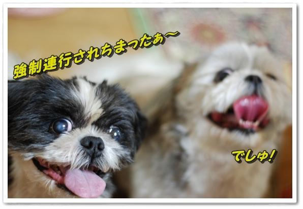 bk1DSC_0182.jpg