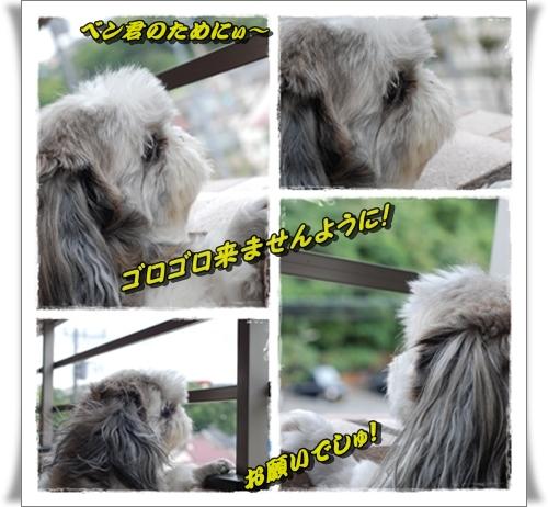 bk1_20080829231208.jpg