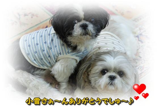 koyukin3DSC_0250.jpg
