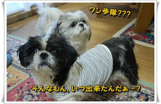 wanpotai2DSC_0118.jpg