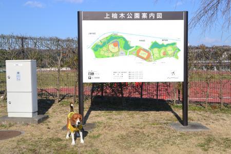 20120326上柚木公園01