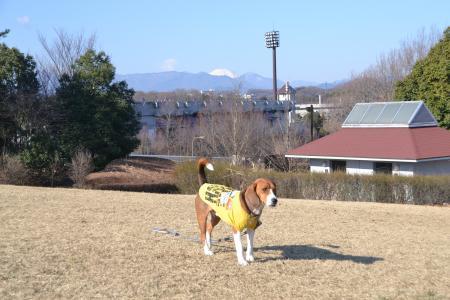 20120326上柚木公園09