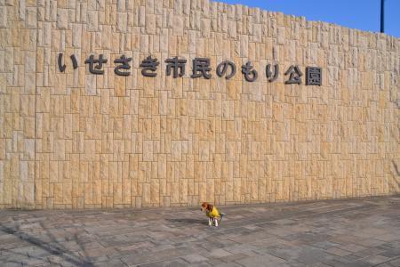 20120326伊勢崎04