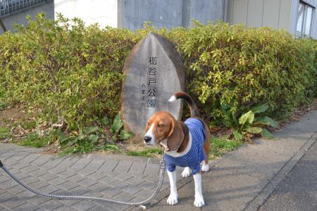 0330栃谷戸公園01