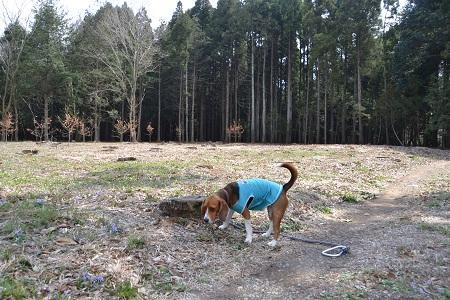 20120406佐倉市民の森11