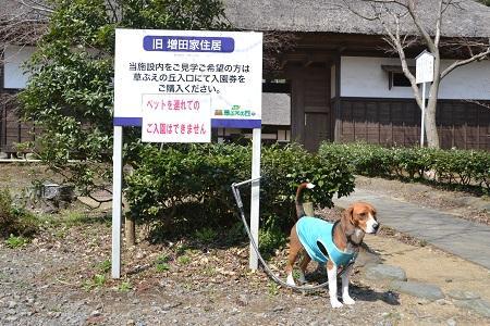 20120406佐倉市民の森07