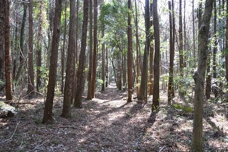 20120406佐倉市民の森17