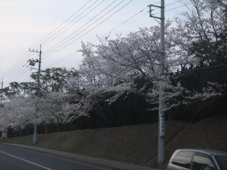 20120410散歩04