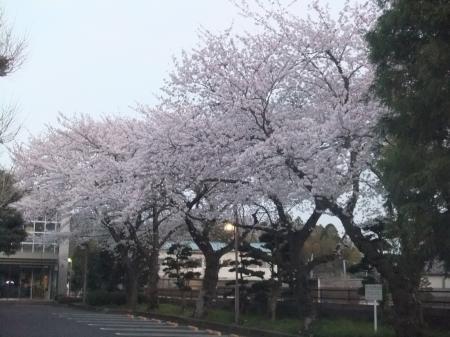 20120410散歩09