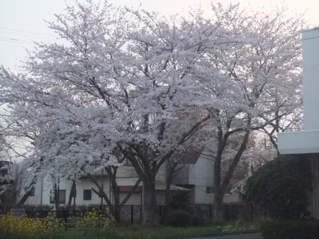 20120410散歩10