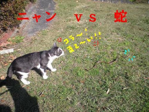 nyan3・搾シ狙convert_20090601103856