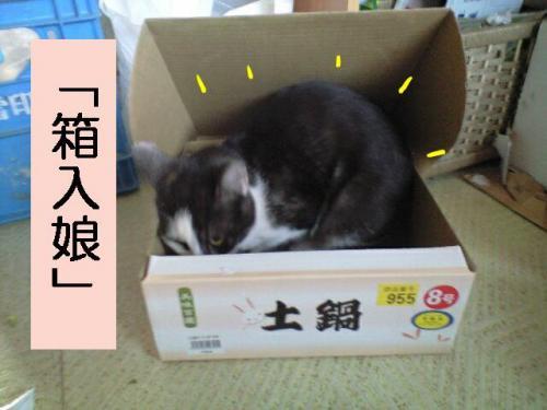 nyan2・搾シ狙convert_20090601104248