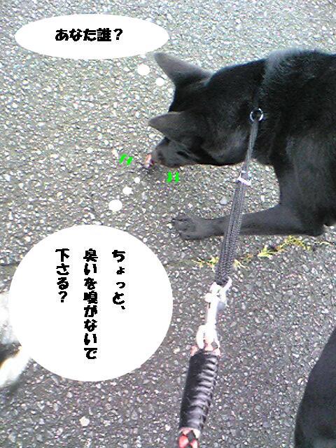 kabutomushi1-1