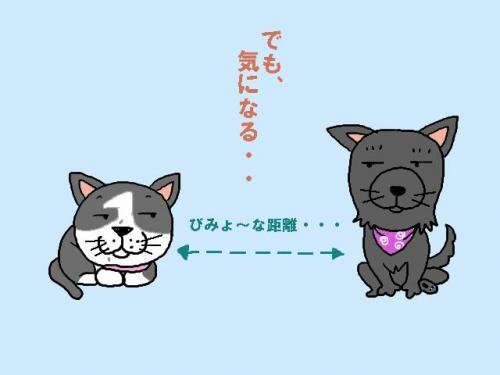 bimyou_convert_20090601111635.jpg