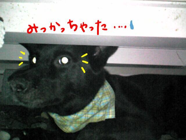 hikarume-1.jpg
