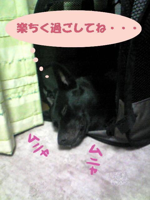 yumenonaka.jpg