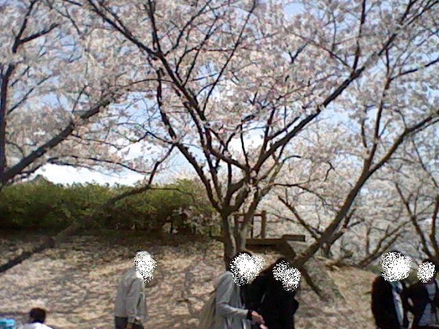 お花見@2011