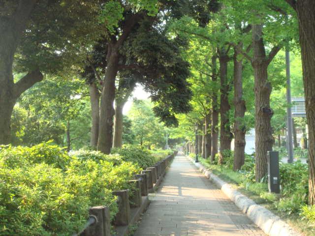 朝山下公園