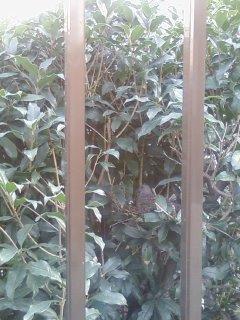 2008・11・18山鳩の巣