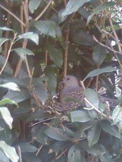 2008・11・18山鳩の巣②