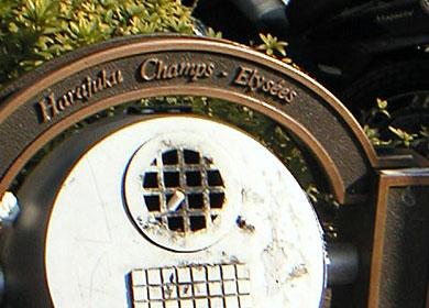 harajukuchamps