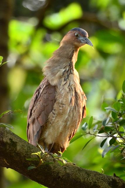 巨大な鳥の巣発見(2)