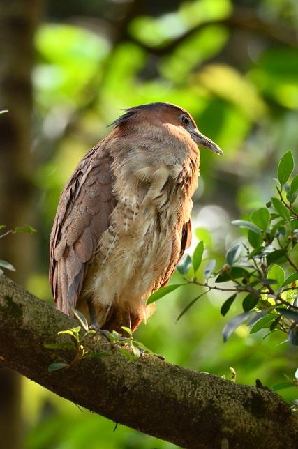 巨大な鳥の巣発見(1)
