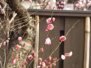 2月25日竹ノ塚 (Small)