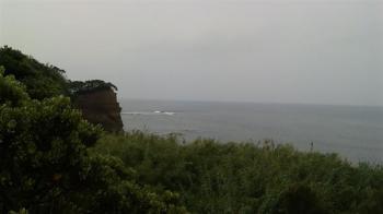 tanegasima (2) (Small)