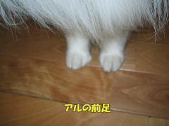 アルの前足
