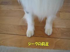 ジークの前足