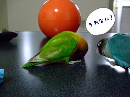 010_20120305103505.jpg