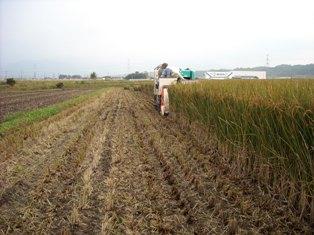 稲刈りandロールマシン