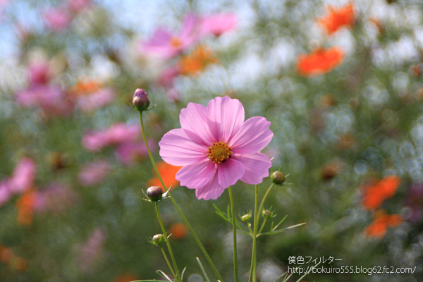 7840blog_10.jpg