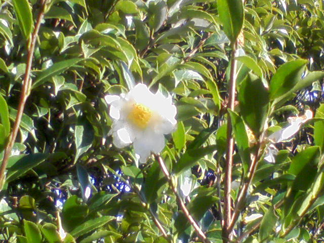 岩屋山山頂の花
