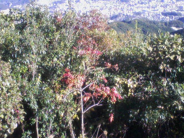 岩屋山紅葉